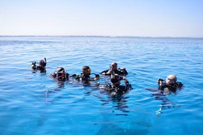 dive pro-team