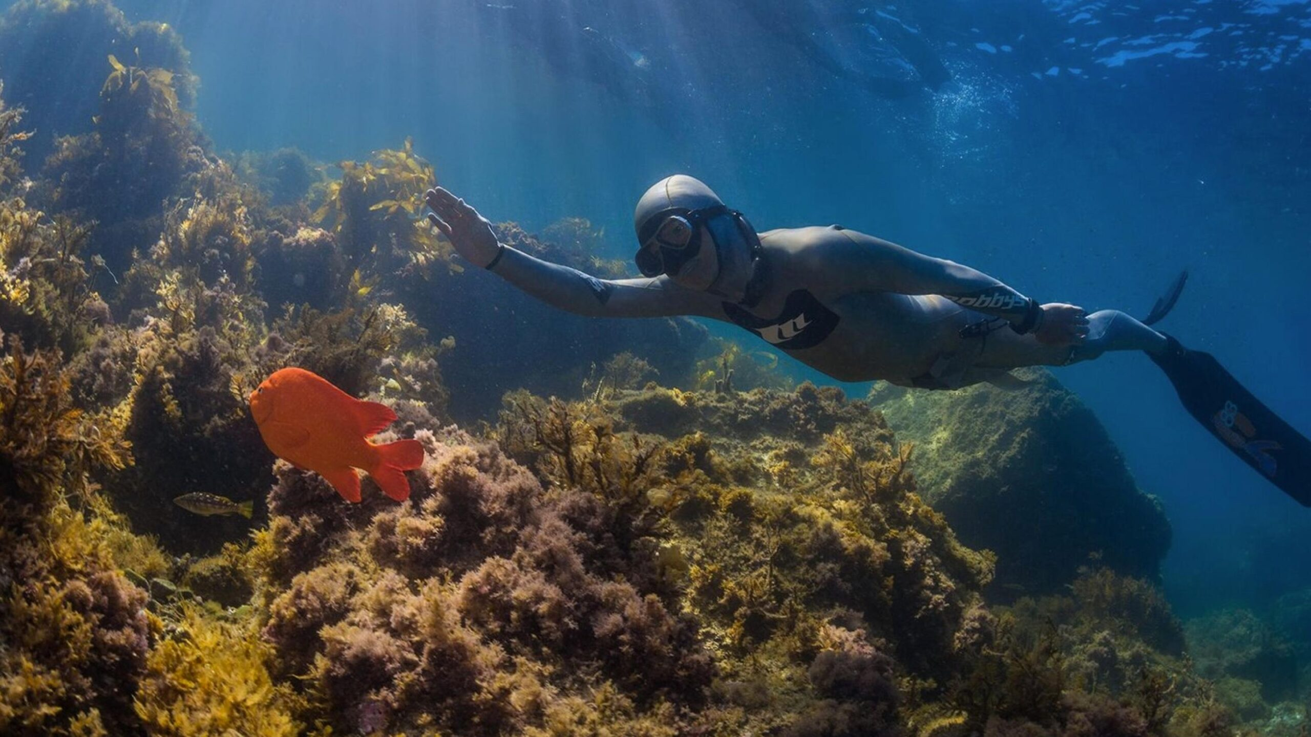 Basic-Freediver- dive pro