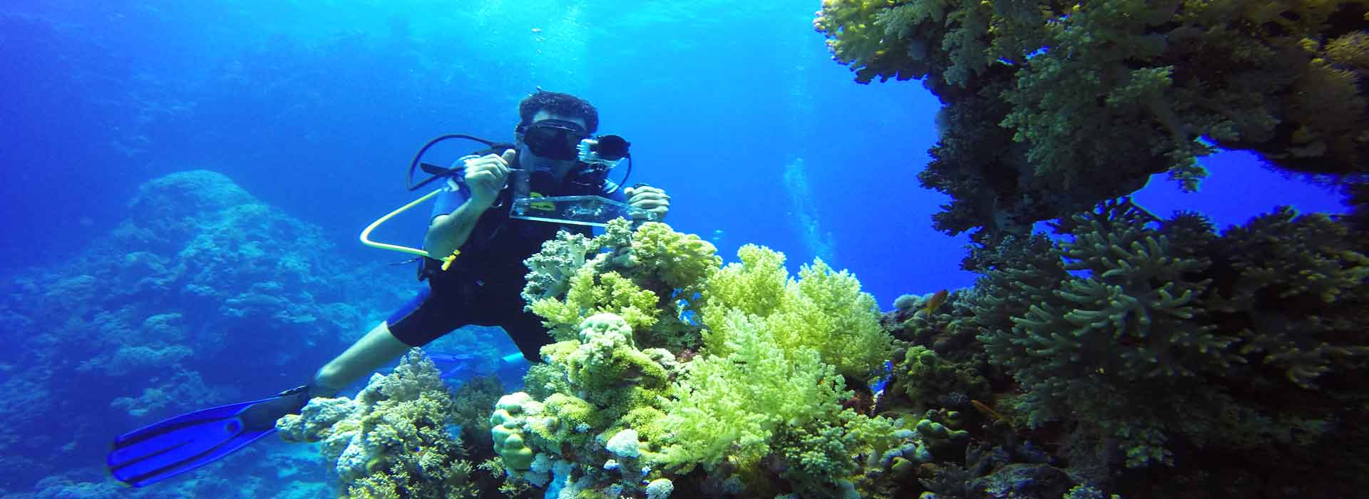 coral-reef-pice- dive pro