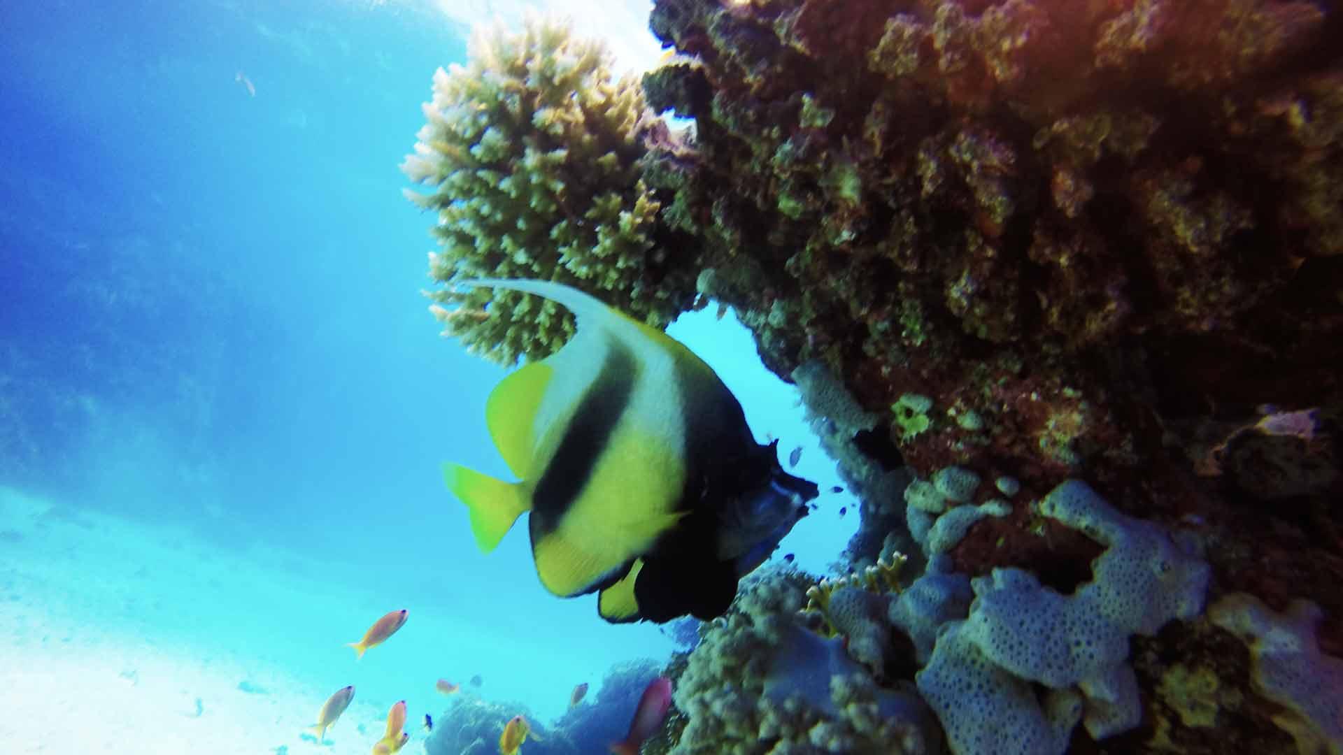 coral- dive pro