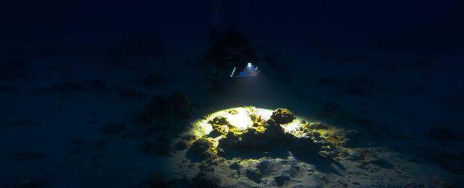 night-dive- dive pro