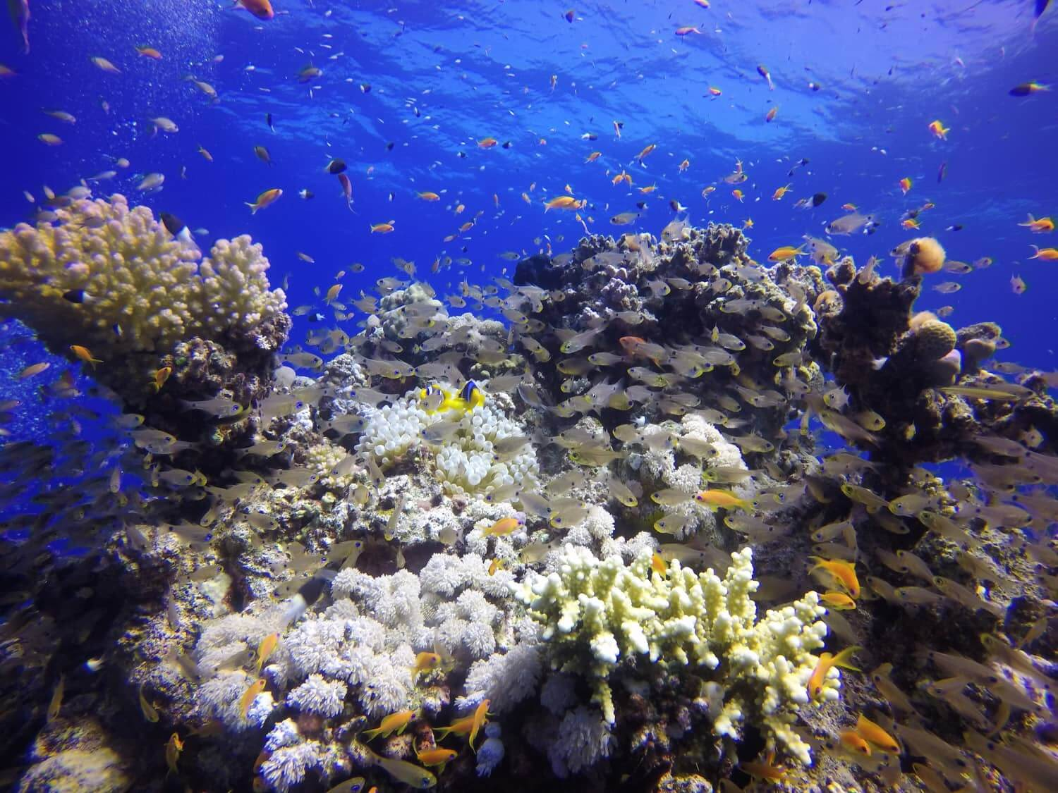 Egypt-REDSEA-Hurghada-DivePro-Academy-Scuba-Diving-Center-Beautiful-Coral-Reef