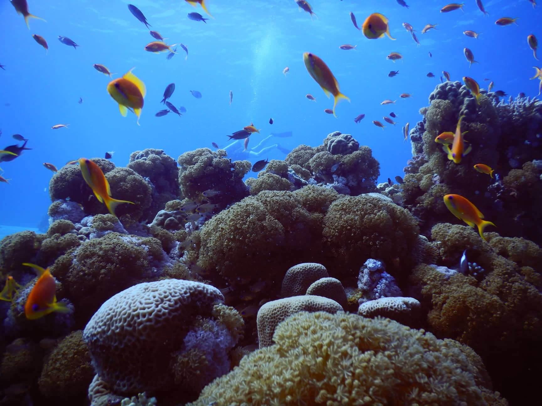 Egypt-REDSEA-Hurghada-DivePro-Academy-Scuba-Diving-Center-Coal-Reef3