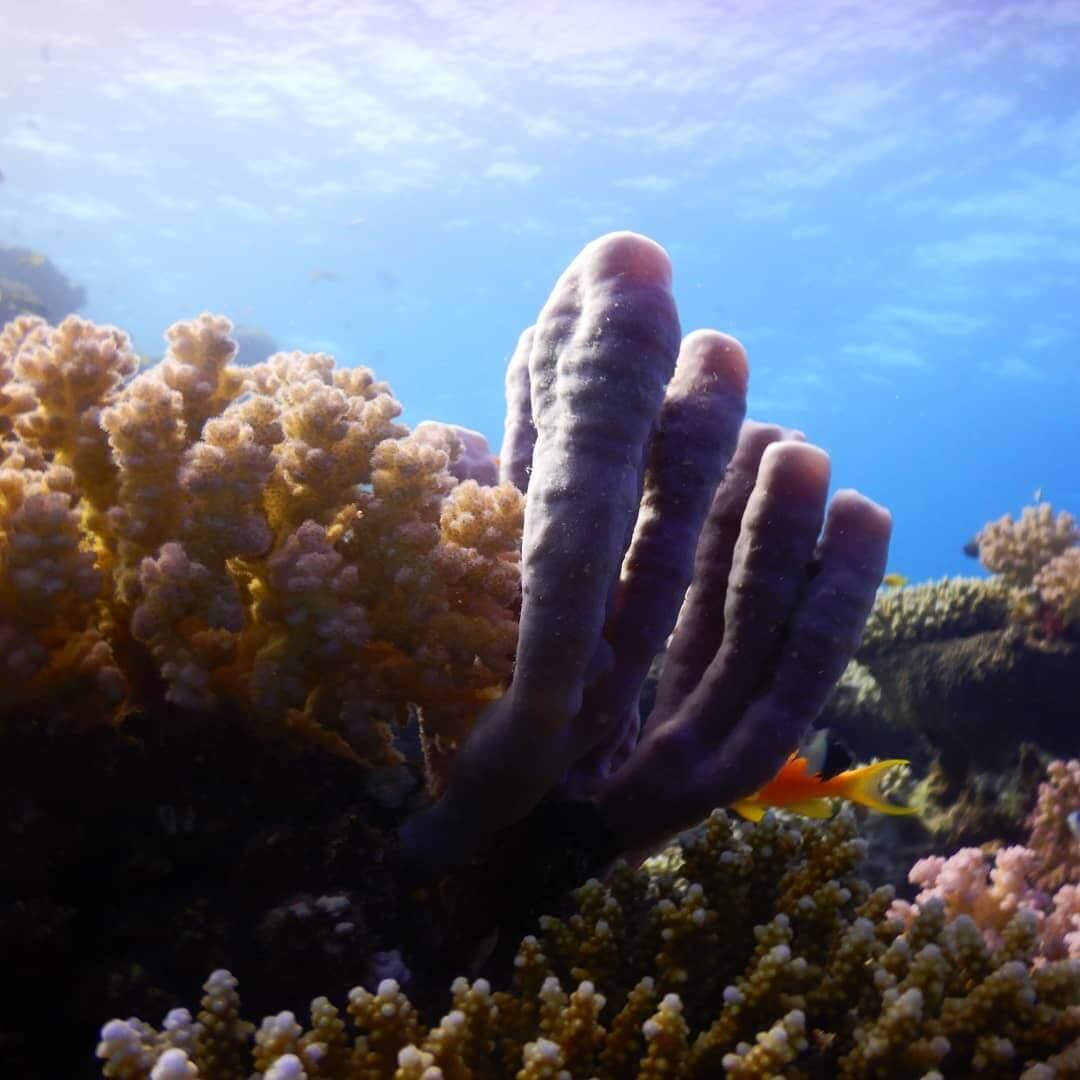 Egypt-REDSEA-Hurghada-DivePro-Academy-Scuba-Diving-Center-Coral-Reef-7