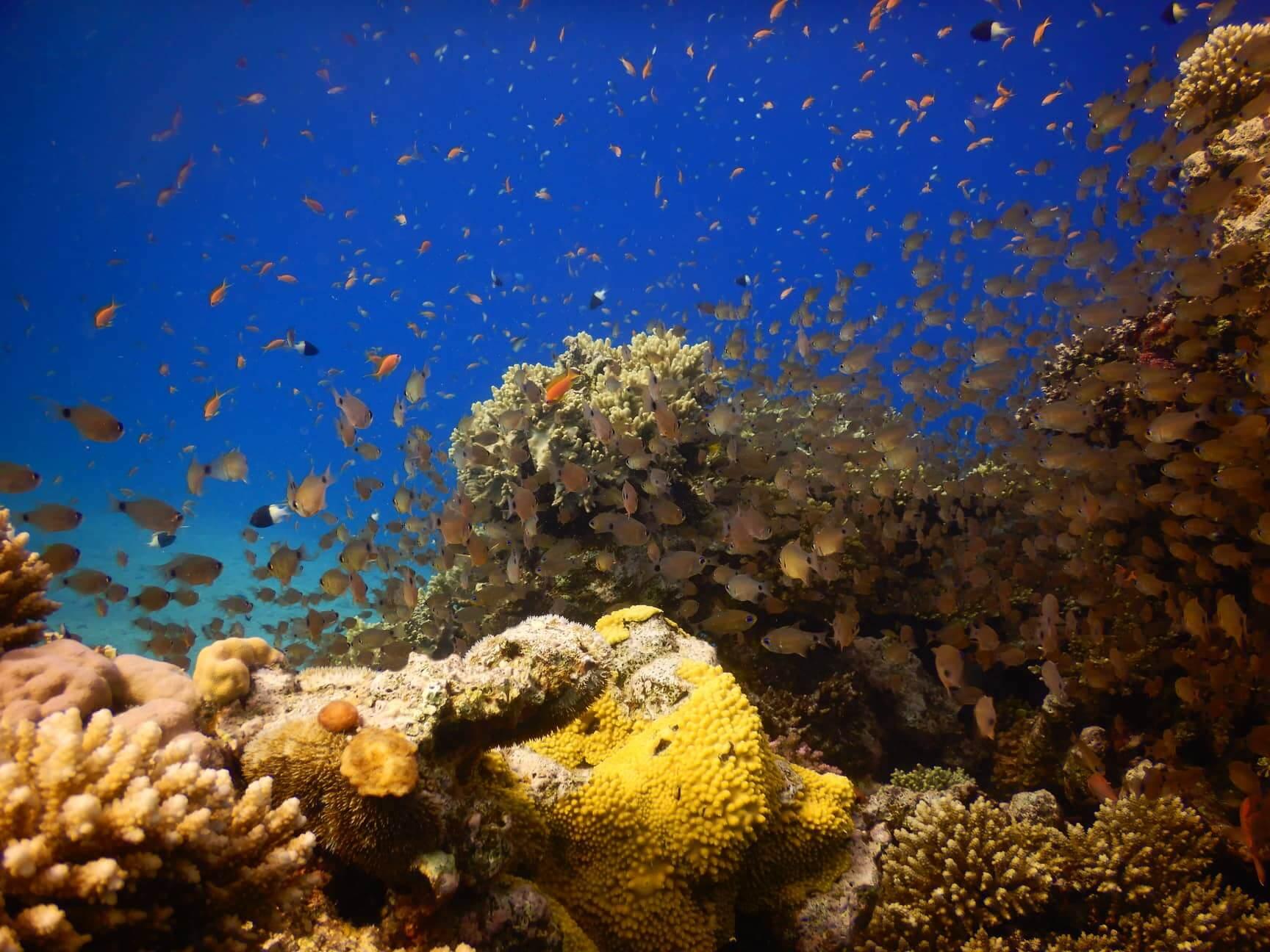 Egypt-REDSEA-Hurghada-DivePro-Academy-Scuba-Diving-Center-Coral-Reef-8