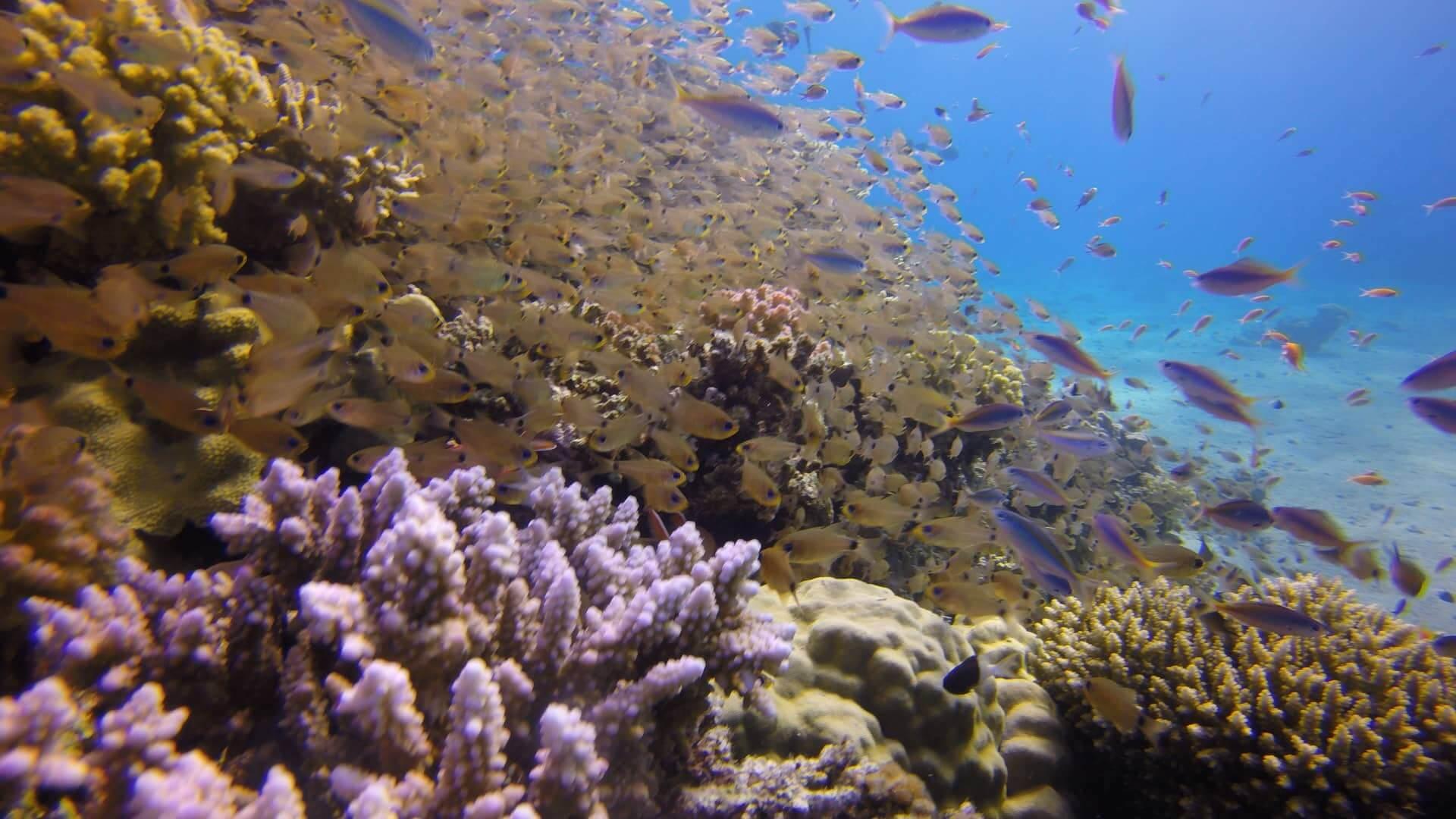 Egypt-REDSEA-Hurghada-DivePro-Academy-Scuba-Diving-Center-Coral-Reef