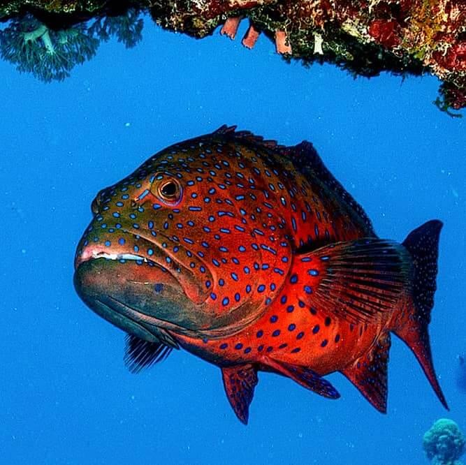 Egypt-REDSEA-Hurghada-DivePro-Academy-Scuba-Diving-Center-Fish-1