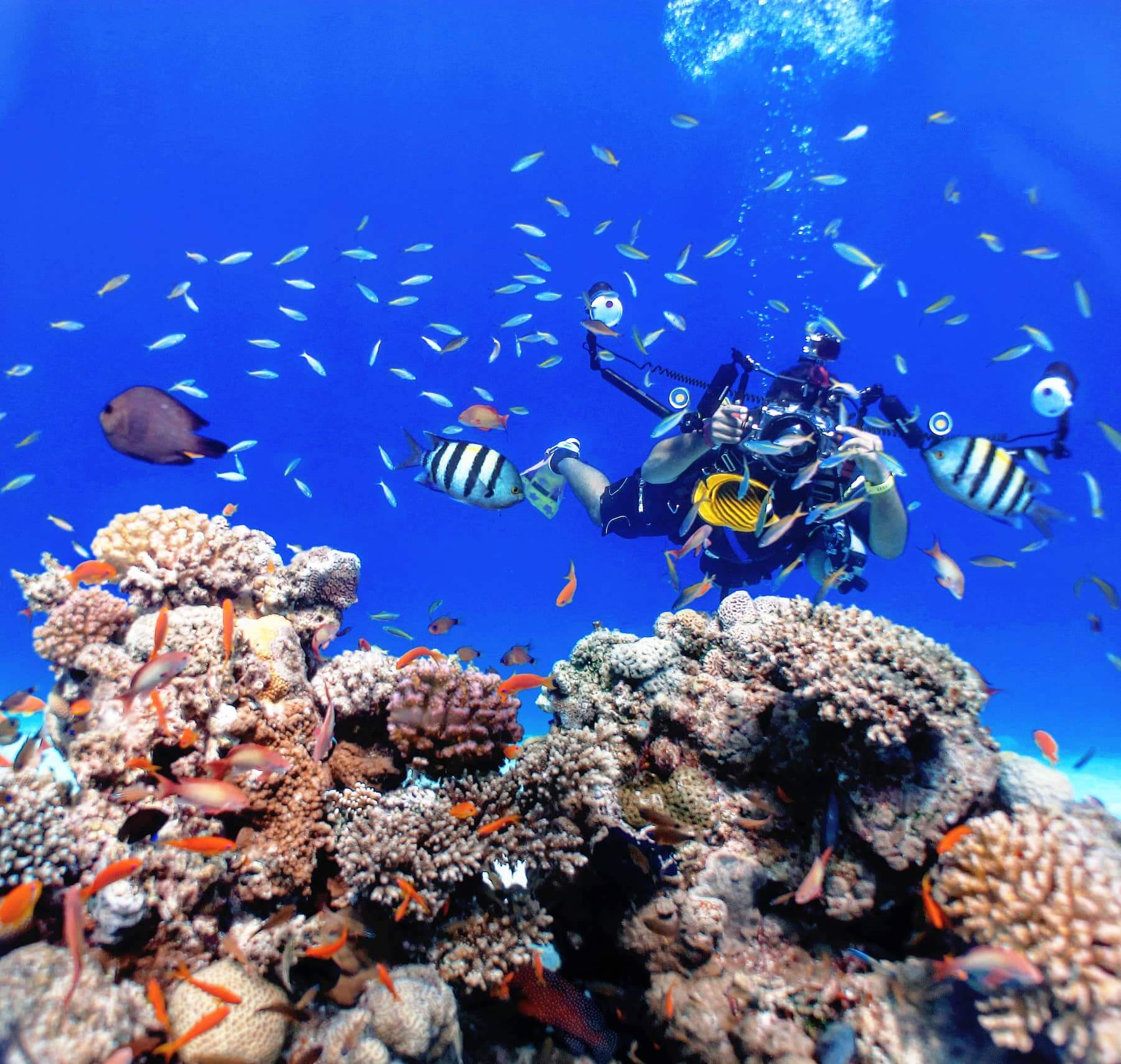 Egypt-REDSEA-Hurghada-DivePro-Academy-Scuba-Diving-Center-Fish-Coral-Reef