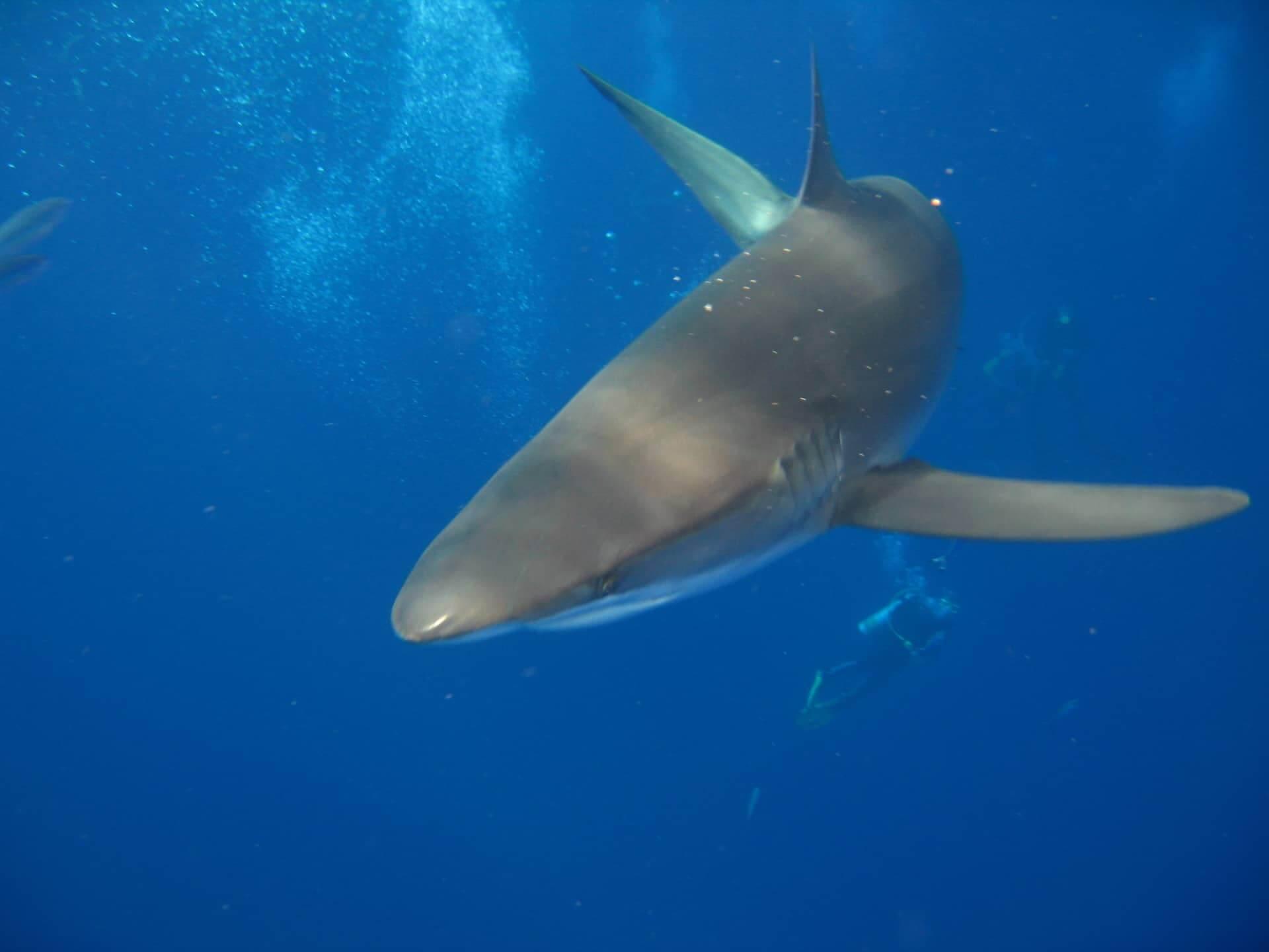Egypt-REDSEA-Hurghada-DivePro-Academy-Scuba-Diving-Center-Shark-4