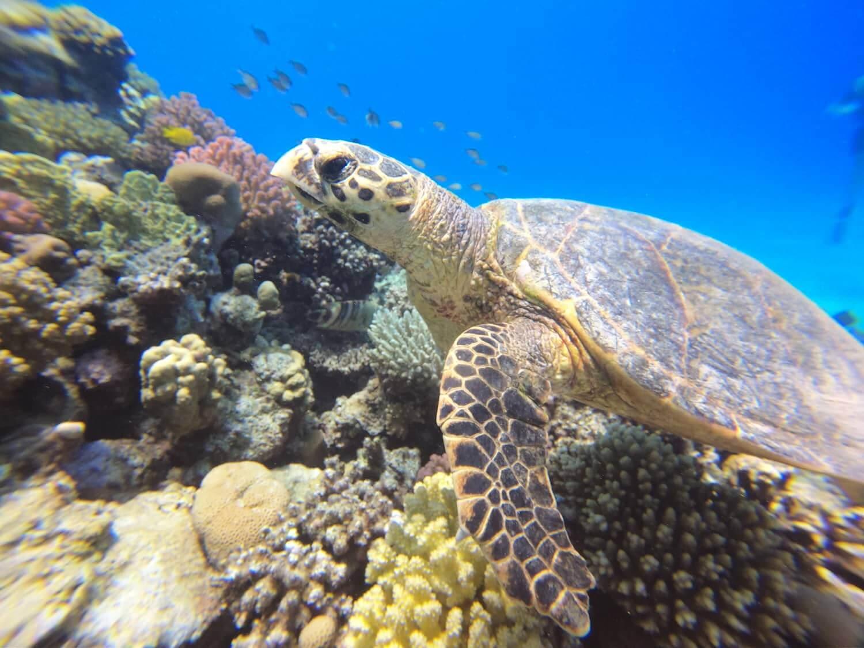 Egypt-REDSEA-Hurghada-DivePro-Academy-Scuba-Diving-Center-Water-Trutle-3