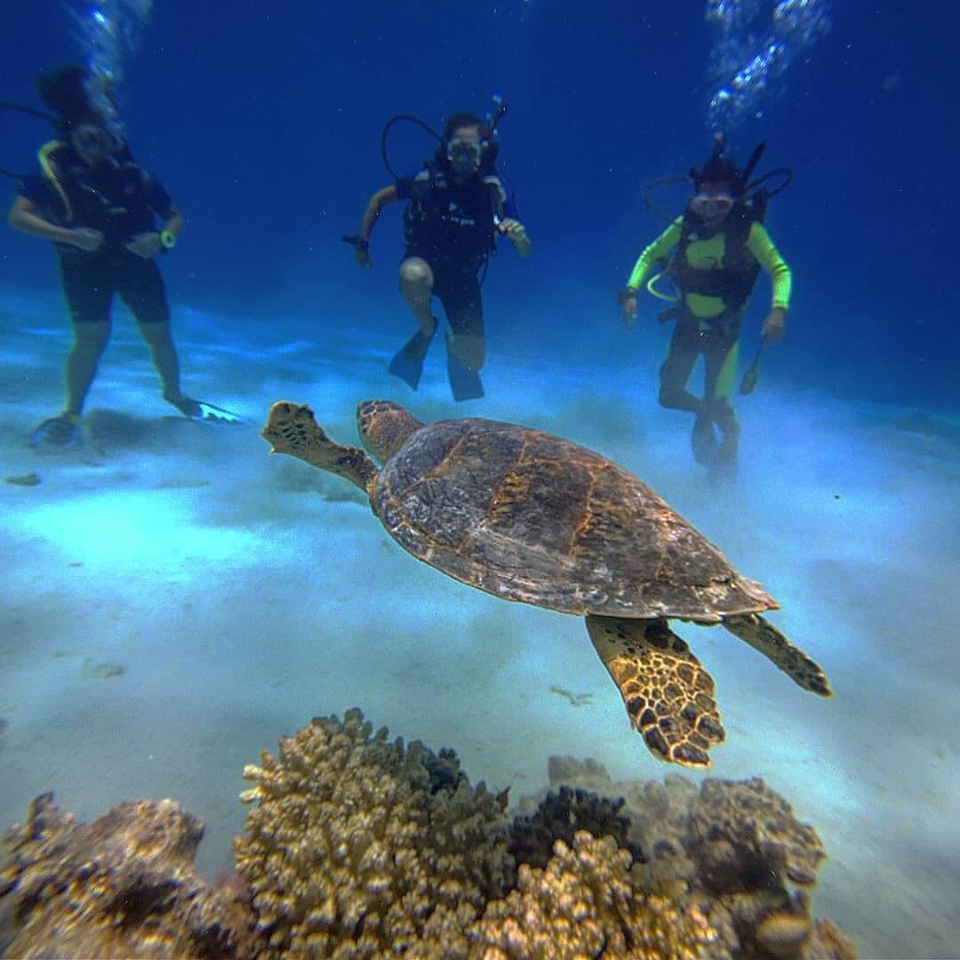 Egypt-REDSEA-Hurghada-DivePro-Academy-Scuba-Diving-Center-Water-Trutle-and-Divers