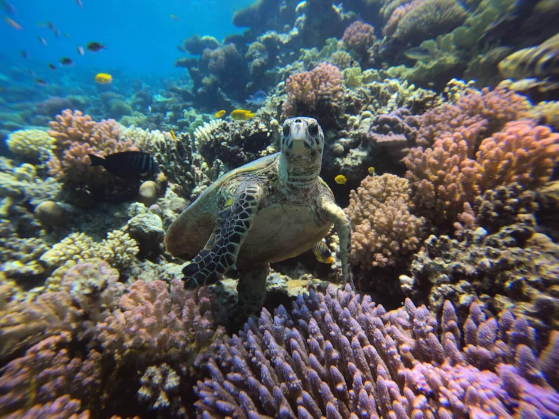 Egypt-REDSEA-Hurghada-DivePro-Academy-Scuba-Diving-Center-Water-Trutle