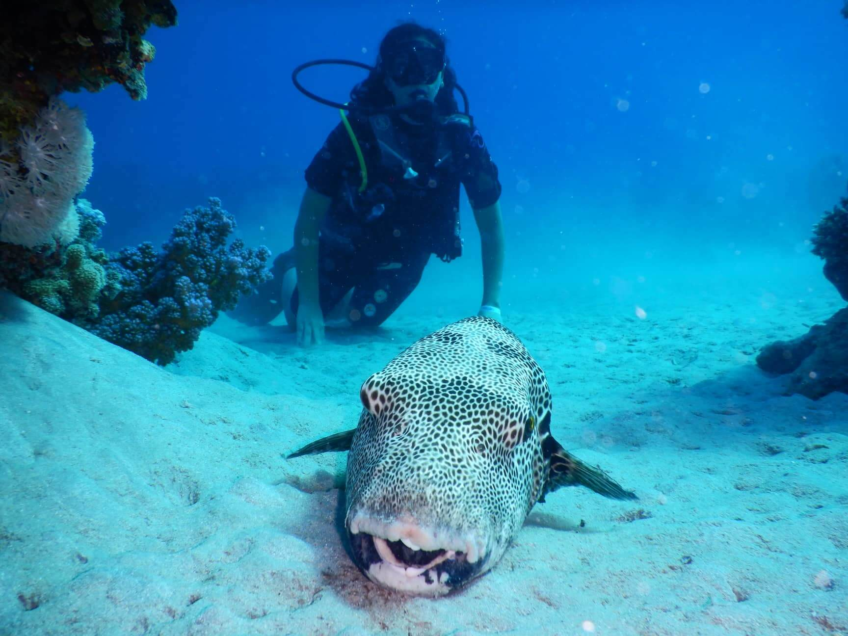 Egypt-REDSEA-Hurghada-Divepro-Academy-Diving-Center-Diver-with-Fish-and-House-Reef