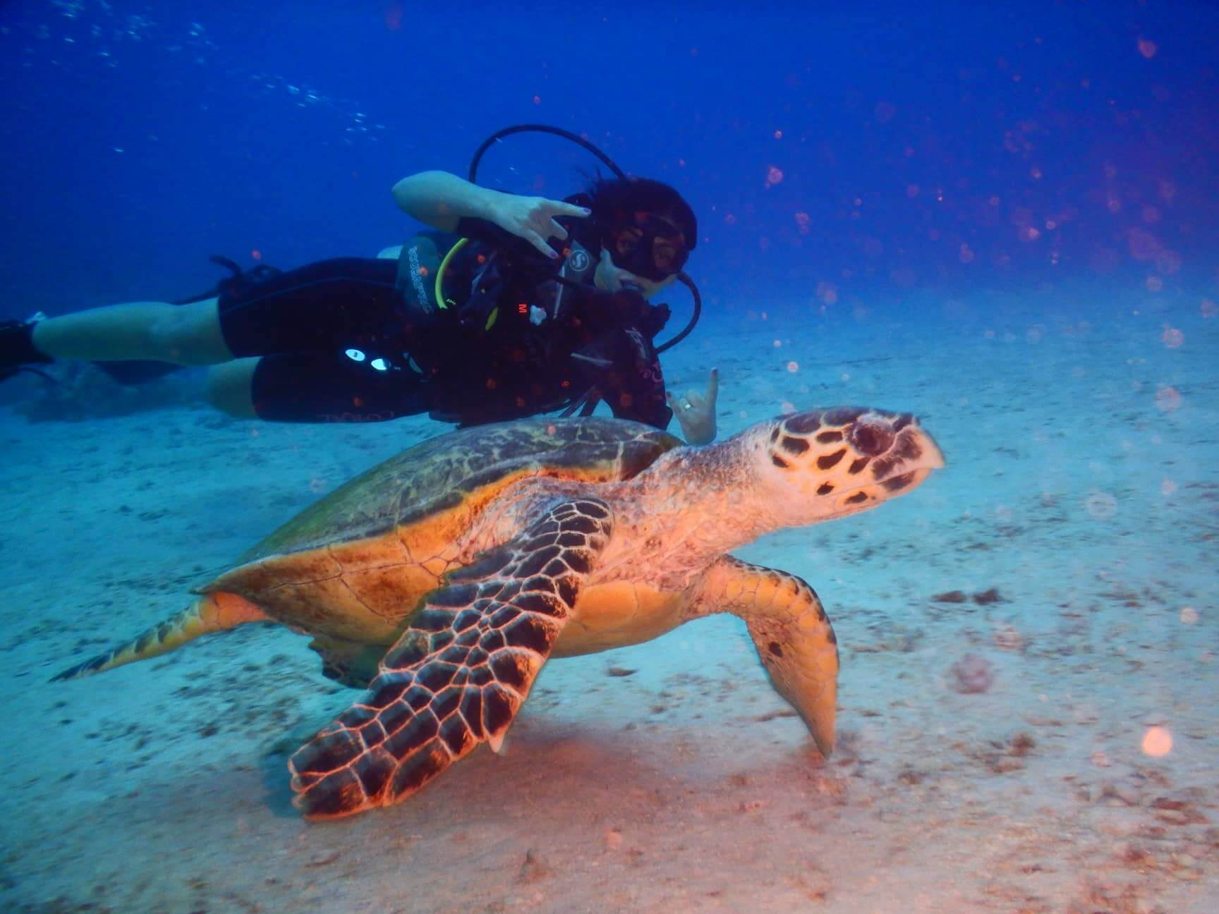 Egypt-REDSEA-Hurghada-Divepro-Academy-Diving-Center-Diver-with-Water-Trutle