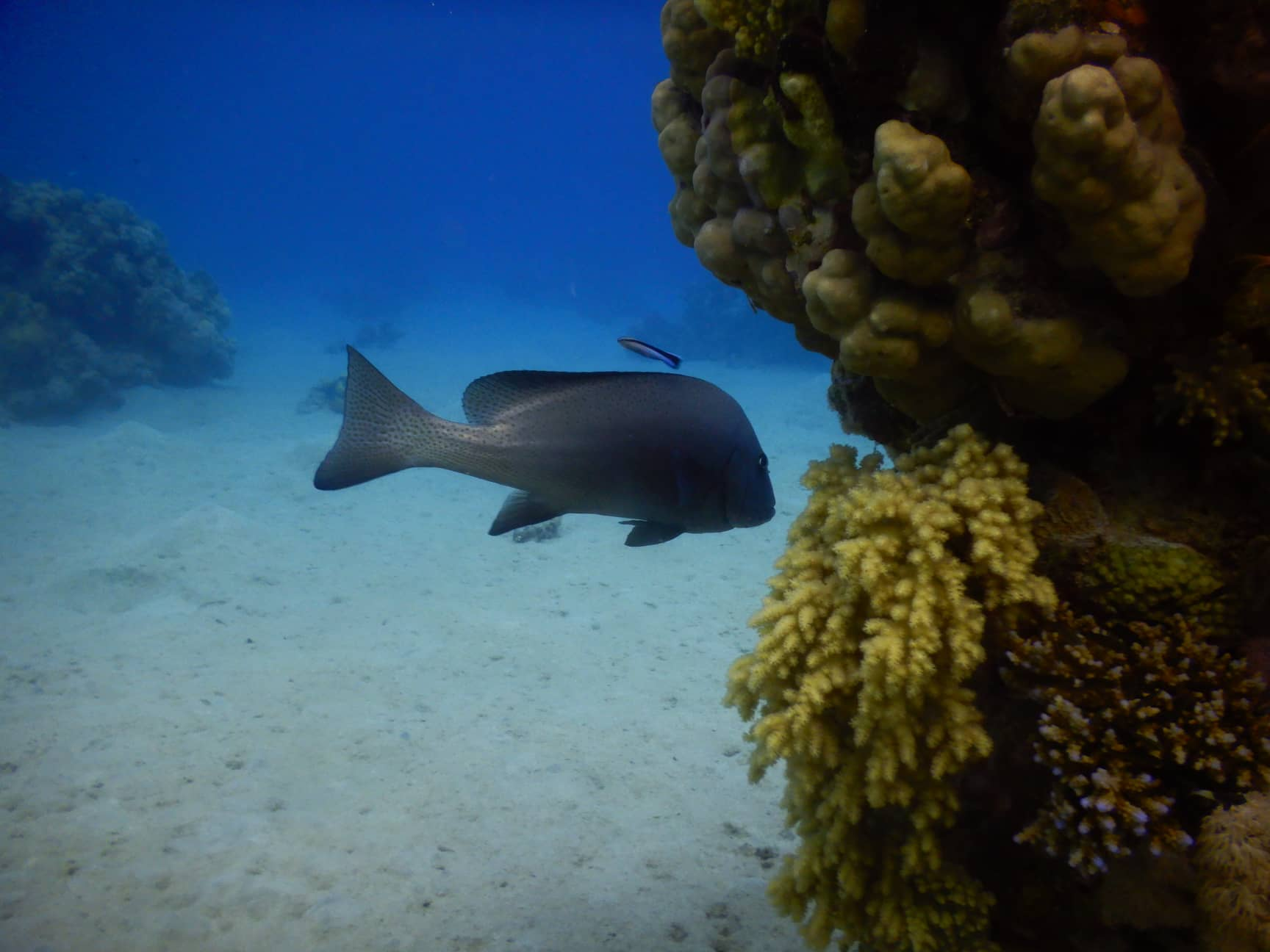 Egypt-REDSEA-Hurghada-Divepro-Academy-Diving-Center-Fish-House-Reef