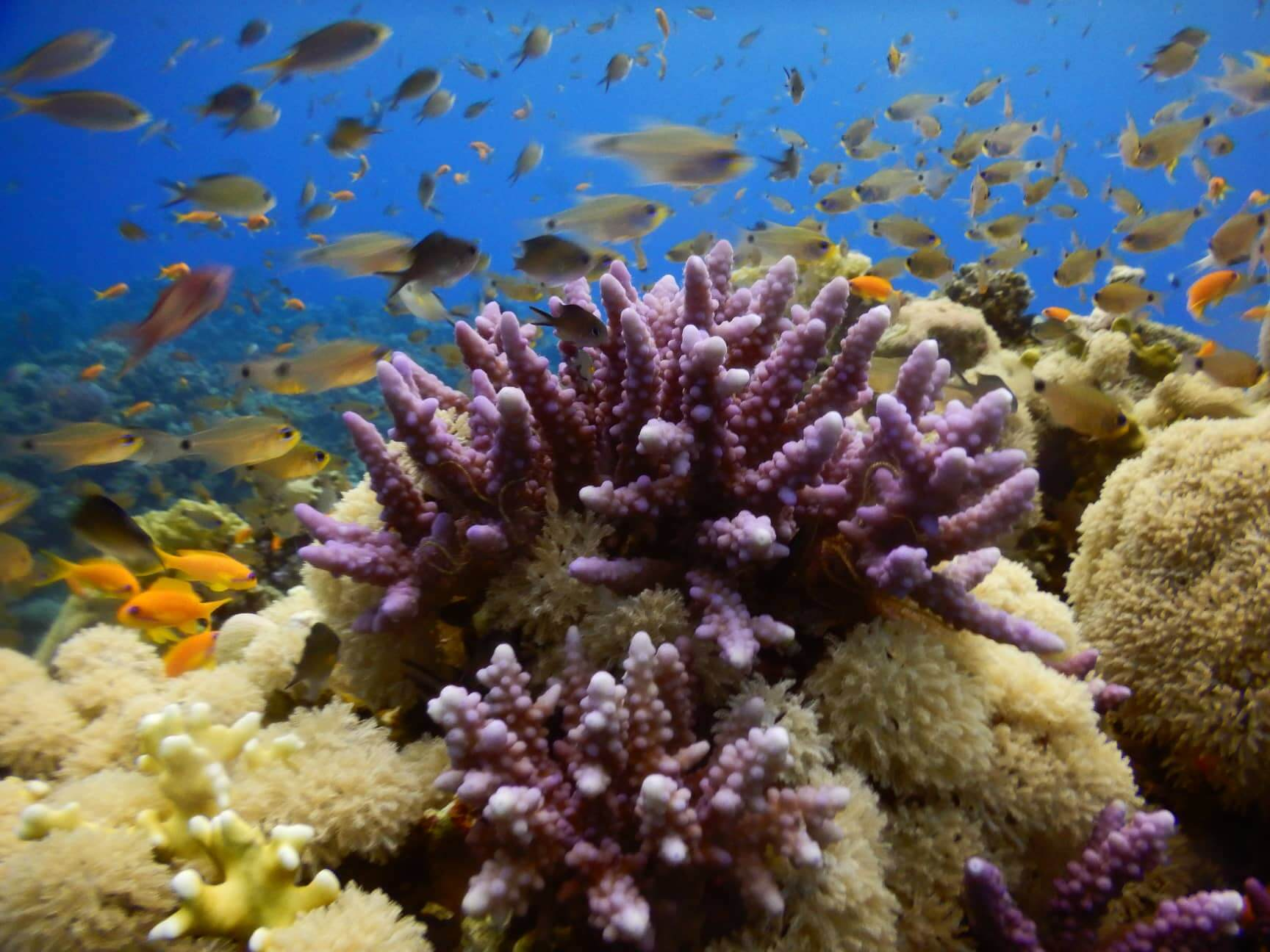 Egypt-REDSEA-Hurghada-Divepro-Academy-Diving-Center-House-Reef