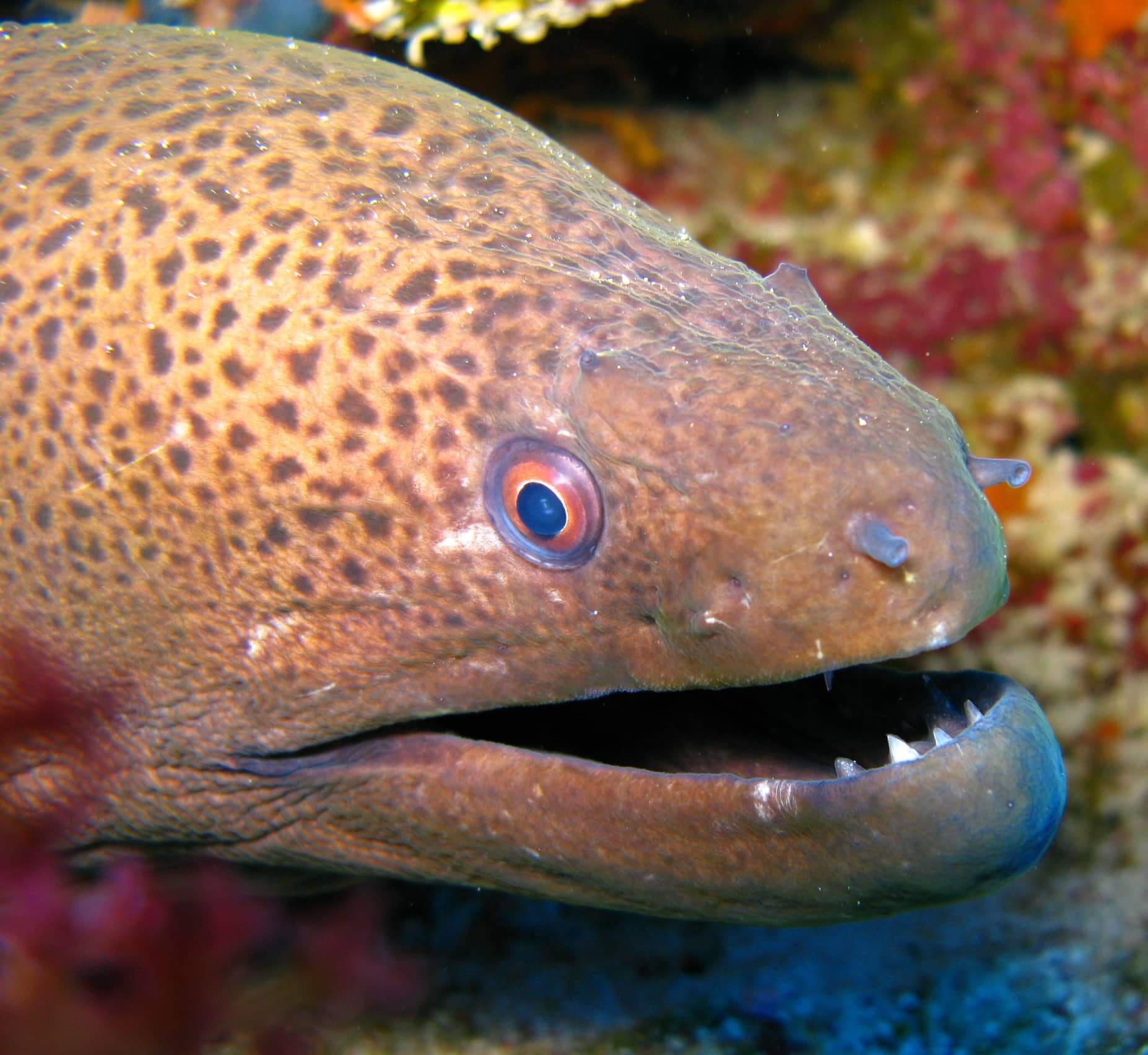 Egypt-REDSEA-Hurghada-Divepro-Academy-Diving-Center-Moray-Eel
