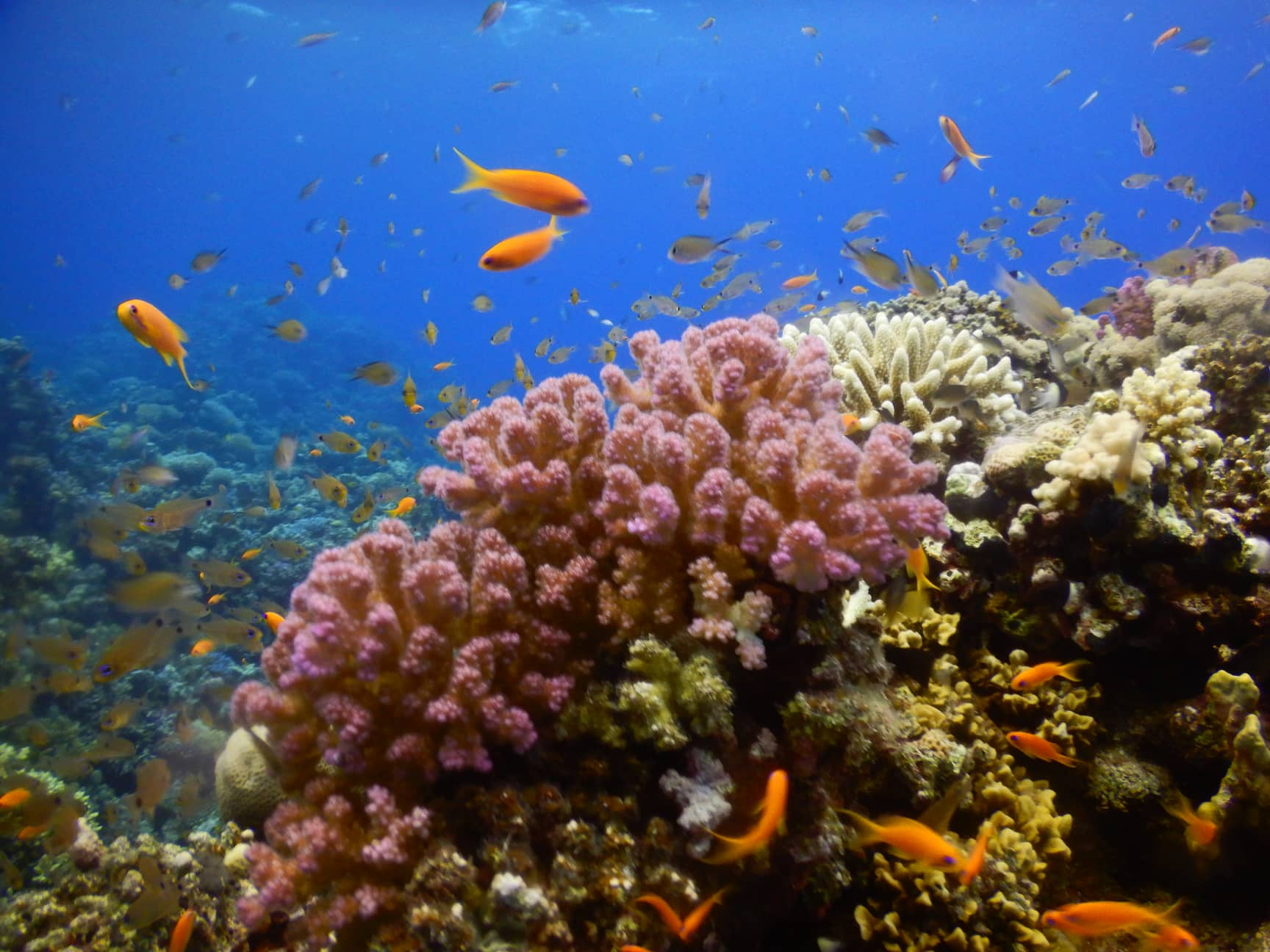 Egypt-REDSEA-Hurghada-Divepro-Academy-Diving-Center-Small-Fish-House-Reef